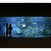 ■アクティビティ:うみたまご「大回遊水槽」は約90種類、1500尾の魚たちが泳いでいます