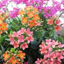 館内のいたるところには季節のお花が飾ってあります♪