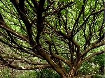 ジオパーク あこうの木