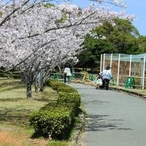 桜が満開の鳥羽市民の森公園