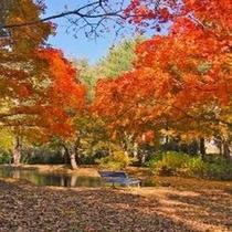真鍋庭園●秋