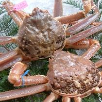 タグ付活松葉蟹