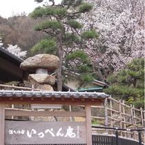 春のいっぺん庵 桜