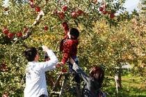 弘前でりんご狩りはいかがでしょうか?