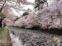 弘前☆春の桜日本の風景♪
