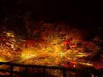 燃え咲かる様な、弘前の紅葉♪