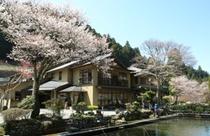 外観 桜2