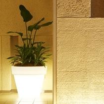 エレベータホール鉢植え