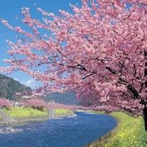 2月中旬から3月上旬にかけては河津桜が楽しめます♪