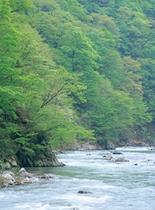 夏の赤石渓流
