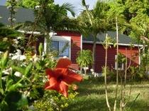 ハイビスカスの池からみる南面の家