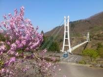 春のスカイブリッジ