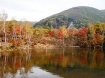「まいめの池」の紅葉。