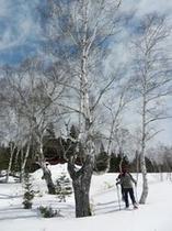 冬の白樺。