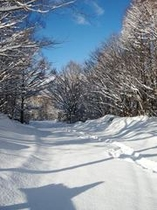新雪と青空♪