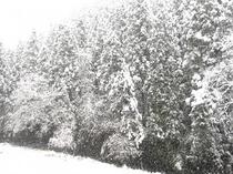 雪景色客室窓から一面の銀世界
