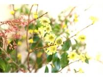 美山の里山に咲く花木