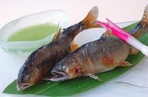 【夏料理】【天然鮎塩焼】美山川の香魚。焼きたてをお召し上がりいただけます