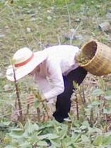 毎年春になると、必要なときに、必要な分だけ山菜採りに出かけます。