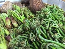 山菜は美山を代表する食材の一つで、一年中使用いたします。