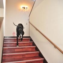 *館内/階段