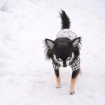 *ドッグラン/冬はお外で雪遊び☆みんなと遊べてたのしいね!