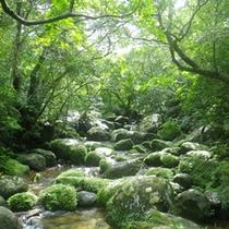 *ユツン川周辺のジャングルにはこんなに美しい森が広がっています♪