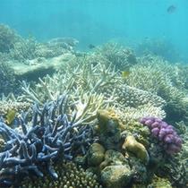 *海遊び/こんなに綺麗な西表島は、シュノーケルやダイビングのスポットとしても人気です!