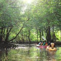 *マングローブの間をカヌーで進む