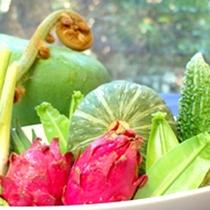 *【料理素材:一例】ジャングルに生息するヒカゲヘゴやオオタニワタリも食材です!