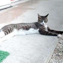 *看板猫のミーちゃん。お客様に大人気です。