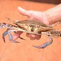 *本日も大漁!三河湾で獲れた新鮮な魚介類。獲ってすぐお客様のお夕食に。どうぞご賞味下さい。
