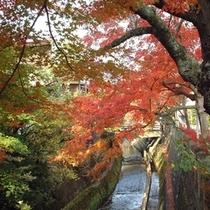 紅葉(江名子川)