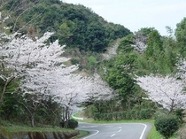 広域農道の1000本の桜【当ホテルよりお車で約10分】