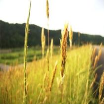 雄物川 川原の風景