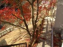 秋の裏庭の小路