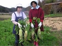 自家製の手作り野菜
