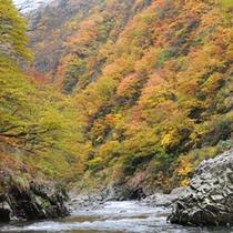 *【清津峡の紅葉】  どんな絵の具をもってしても表せないほどの見事さです!