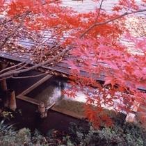 離れの湯【秋】2