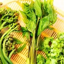 食材 山菜2
