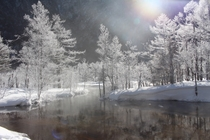 冬の田代池