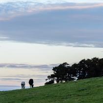 *周辺景色/静かな夕暮れの風景。牛たちものんびり寝床へ帰るところ。