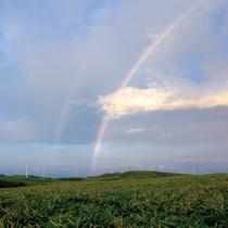 *周辺景色/こんな虹を見れたらきっと良いことがあるはず♪