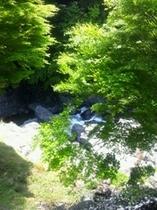新緑と渓流