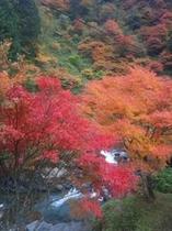紅葉と渓流