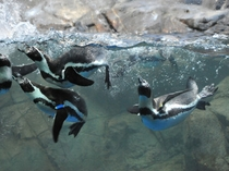 ペンギンストーリー