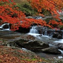 秋 八重滝
