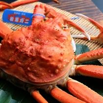 タグ付き活松葉蟹