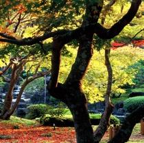 秋 由志苑