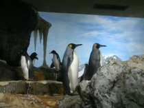 おちゃめなペンギン達